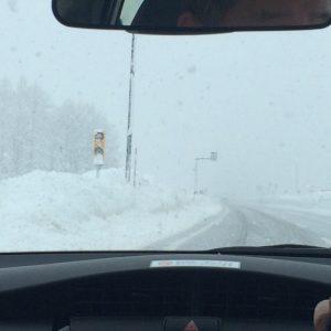 帰り道の関越道は、六日町付近はお約束通りの「トンネル抜ければ、そこは雪国だった」でございます。もう、雪は見るの嫌ですね。